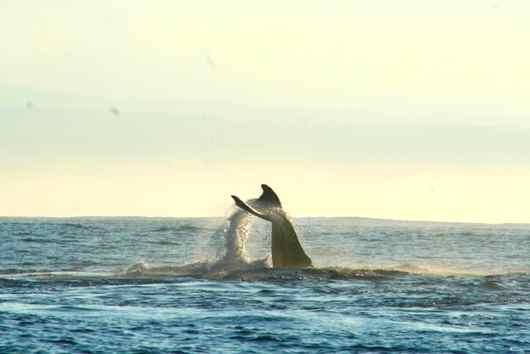 530クジラ1.jpg