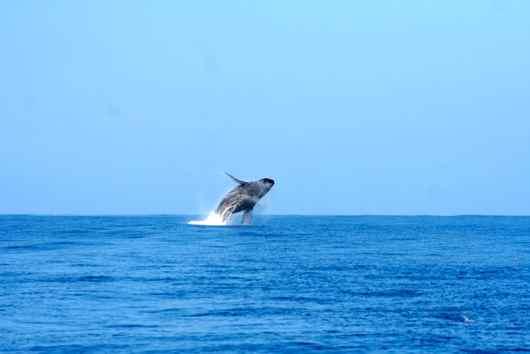 530クジラ2.jpg